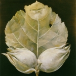 Oříšky,olej,34x32,1989